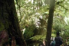 レインフォレスト(温帯原生雨林)の森をハイキング