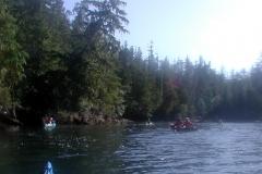 水際まで森がある