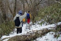 音のない冬の森を歩く