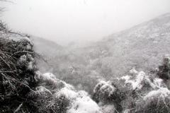 三浦とは思えない雪景色