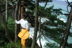 松の林が美しい三陸の海岸