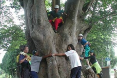 道端にあった大木を皆で囲む