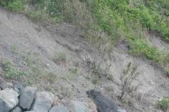 海岸にカモシカがいた